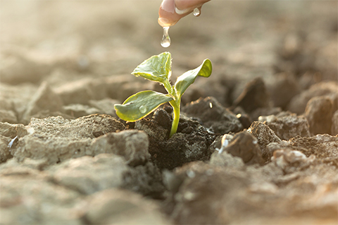 Image of a small plant growing out of barren soil being fed water